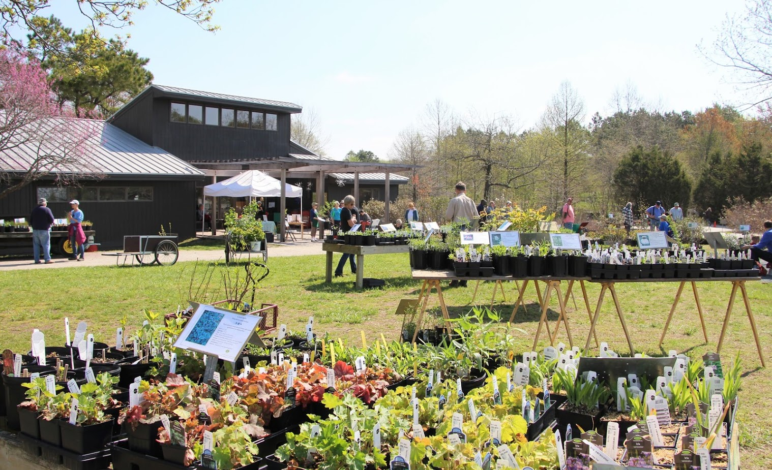 Adkins Arboretum Announces Spring Open House, Native Plant Sale