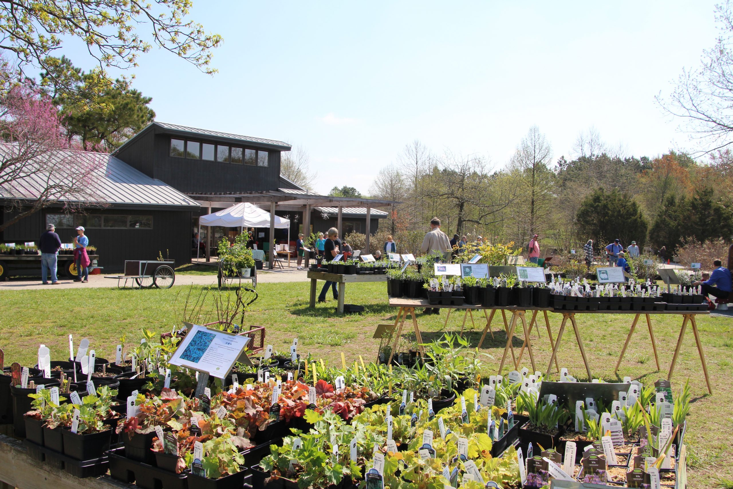 Adkins Arboretum Announces Spring Native Plant Sale